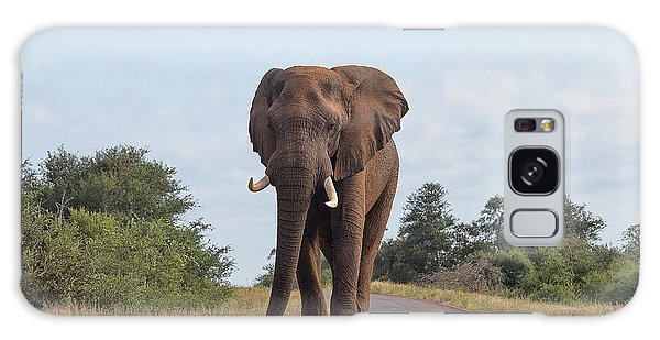 Elephant In Kruger Galaxy Case