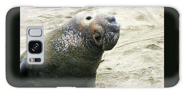 Elephant Seal Galaxy Case