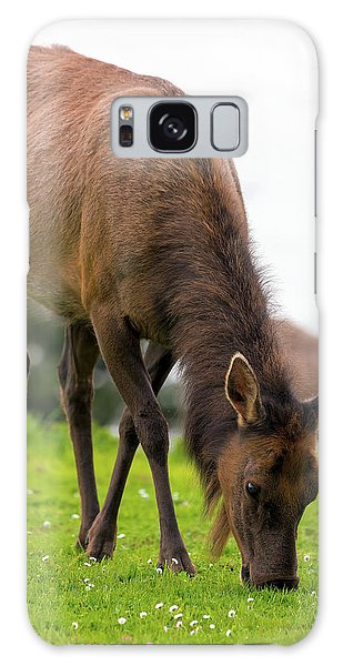 Galaxy Case - Elk Grazing On Green Pasture Closeup by David Gn