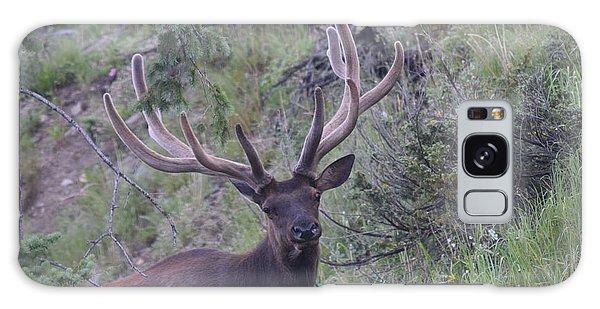 Bull Elk Rmnp Co Galaxy Case