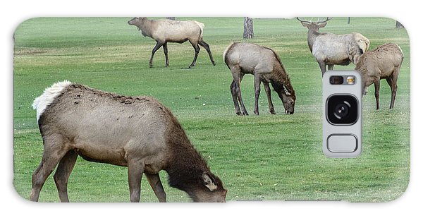 Elk On Golf Course Estes Park Colorado Galaxy Case