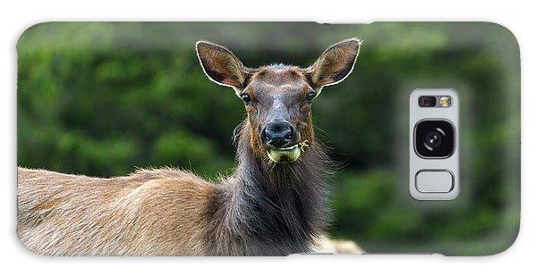 Galaxy Case - Elk Staring Closeup Portrait by David Gn