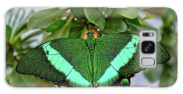 Emerald Swallowtail Butterfly Galaxy Case