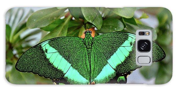 Emerald Swallowtail Butterfly Galaxy Case by Ronda Ryan