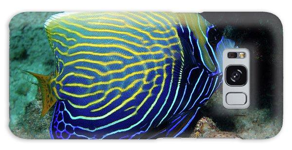 Emperor Angelfish, Red Sea 1 Galaxy Case