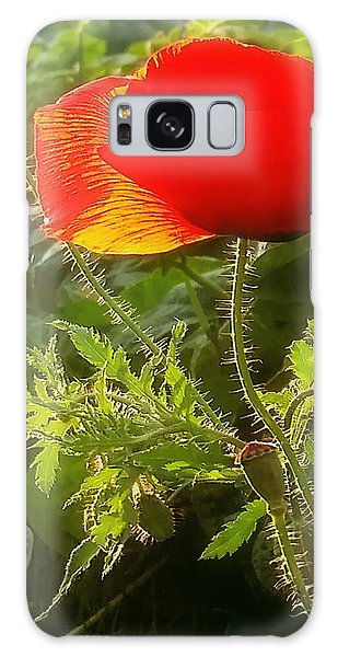Red Poppy At Sunset Galaxy Case