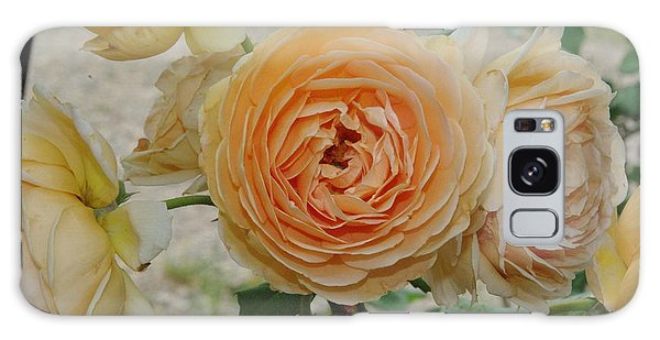 English Rose Apricot Crown Princess Margareta 2 Galaxy Case