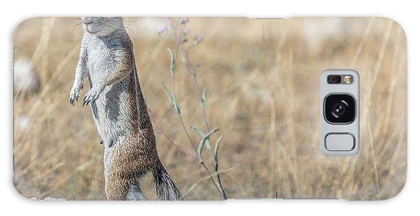 Meerkat Galaxy Case - Etosha - Namibia by Joana Kruse