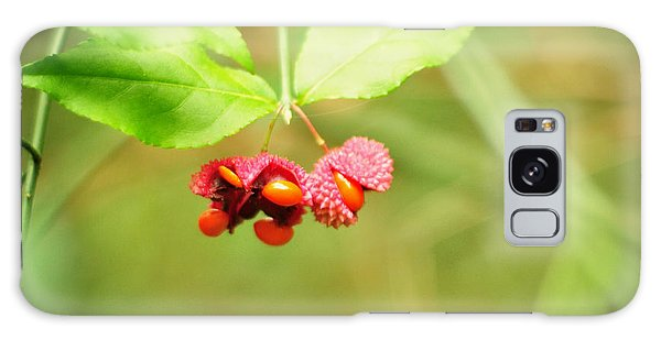 Euonymus Americanus  American Strawberry Bush Galaxy Case