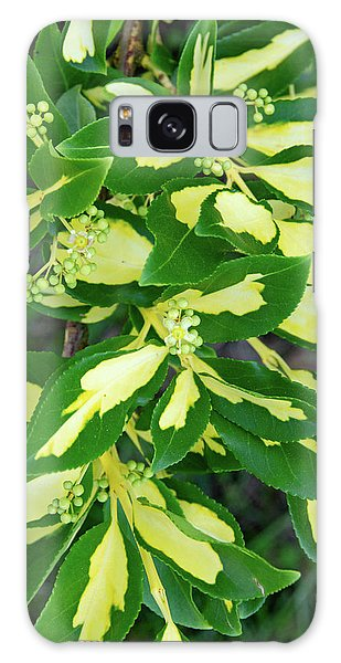Euonymus Blondy Shrub 2 Galaxy Case