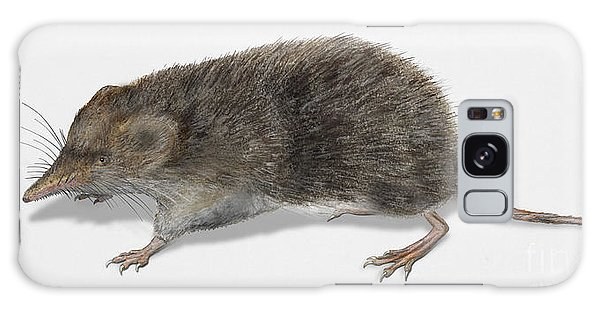 Eurasian Common Shrew Sorex Araneus - Musaraigne Carrelet - Musa Galaxy Case