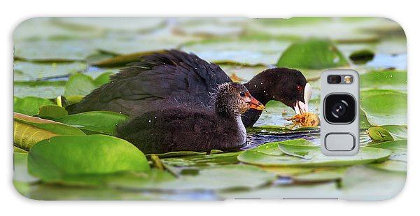 Eurasian Or Common Coot, Fulicula Atra, Duck And Duckling Galaxy Case by Elenarts - Elena Duvernay photo