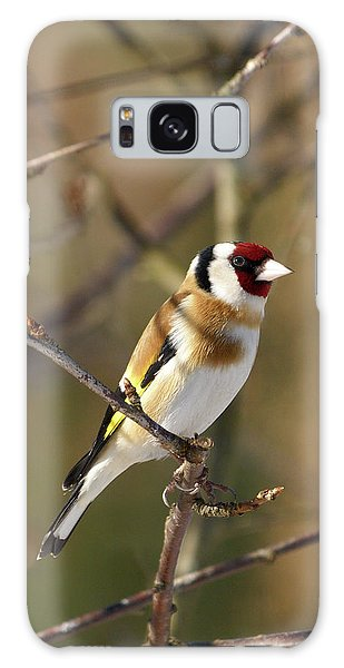European Goldfinch 2 Galaxy Case