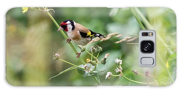 European Goldfinch Perched On Flower Stem B Galaxy Case