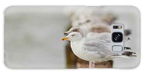 European Herring Gulls In A Row Fading In The Background Galaxy Case
