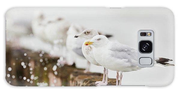 European Herring Gulls In A Row  Galaxy Case