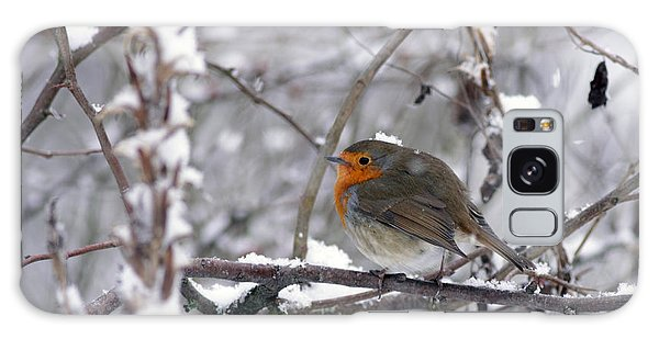 European Robin In The Snow At Christmas Galaxy Case