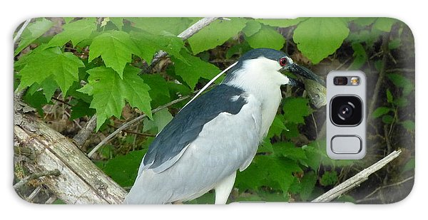 Evening Snack For A Night Heron Galaxy Case by Donald C Morgan