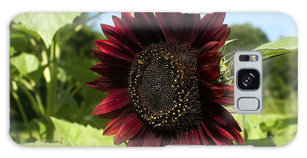 Evening Sun Sunflower #1 Galaxy Case by Jeff Severson