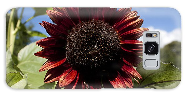 Evening Sun Sunflower #2 Galaxy Case by Jeff Severson