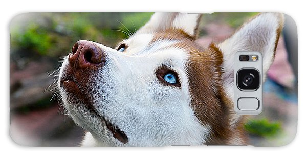 Expressive Siberian  Husky Photo C62017 Galaxy Case