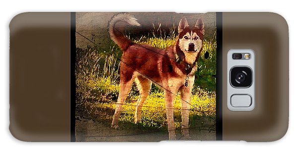Galaxy Case featuring the photograph Expressive Mixed Media Husky A4116 by Mas Art Studio