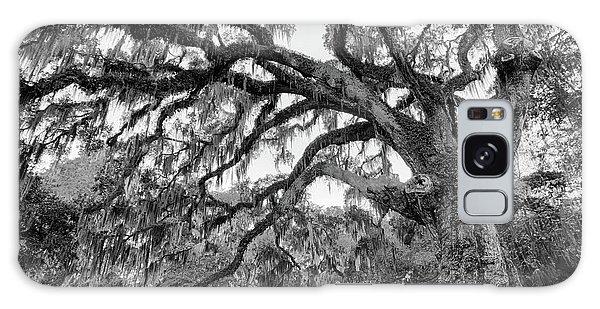 Fairchild Tree Galaxy Case