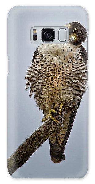 Falcon With Cocked Head Galaxy Case