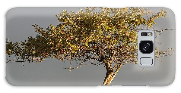 Fall At The Crabapple Tree Galaxy Case