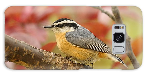 Fall Colors Nuthatch Galaxy Case