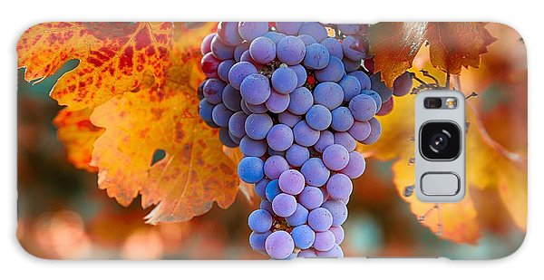 Fall Grapes From The Yakima Valley,  Galaxy Case