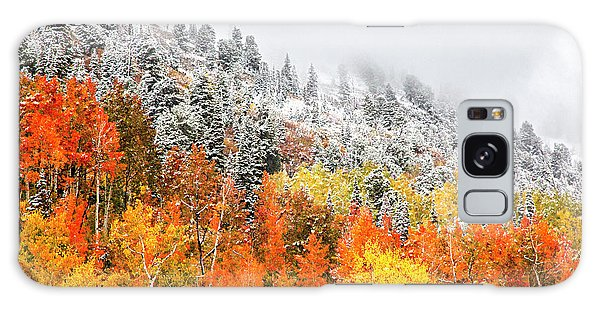 Fall To Winter Canvas Print, Photographic Print, Art Print, Framed Print, Greeting Card, Iphone Case Galaxy Case