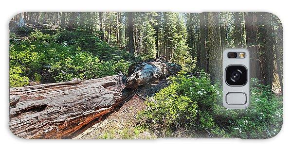 Fallen Tree- Galaxy Case