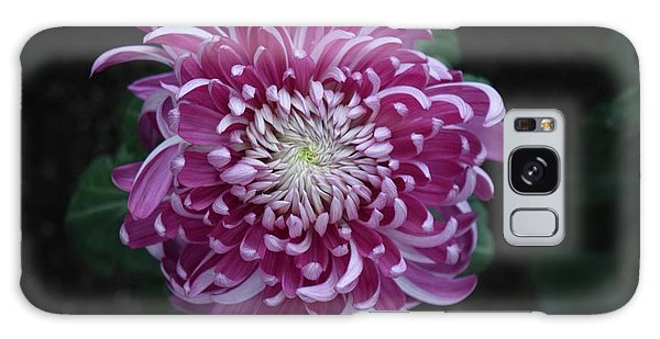 Fancy Chrysanthemum In Pink Galaxy Case