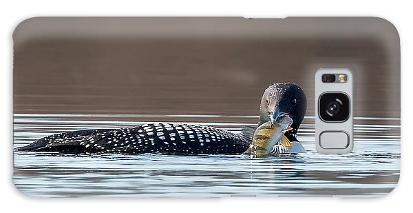 Feeding Common Loon Square Galaxy Case by Bill Wakeley
