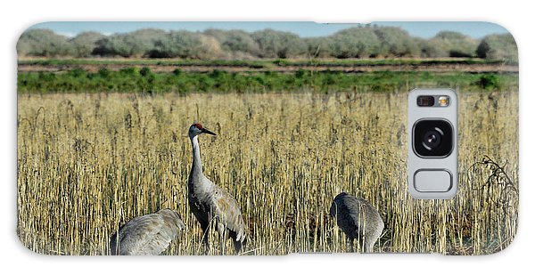 Feeding Greater Sandhill Cranes Galaxy Case