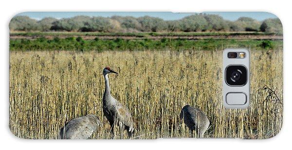 Feeding Greater Sandhill Cranes Galaxy Case