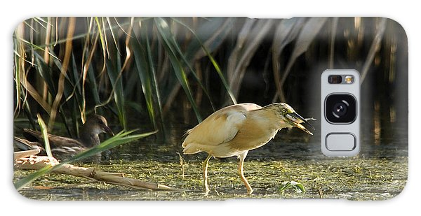 Feeding Squacco Heron Galaxy Case