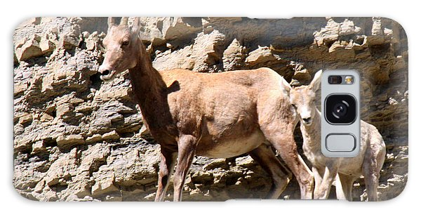 Female Bighorn Sheep With Juvenile Galaxy Case