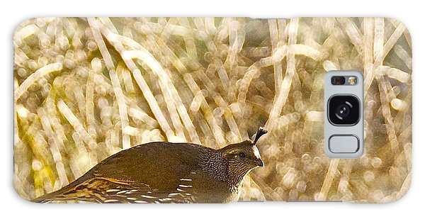 Female California Quail Galaxy Case by Sean Griffin