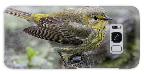 Female Cape May Warbler Galaxy Case