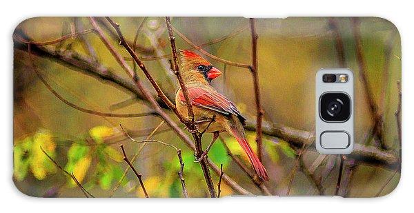 Female Cardinal #1 Galaxy Case