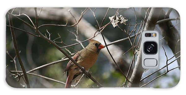 Female Cardinal 3 Galaxy Case