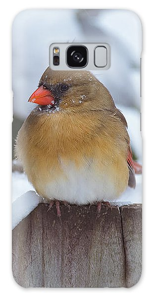 Female Cardinal Galaxy Case
