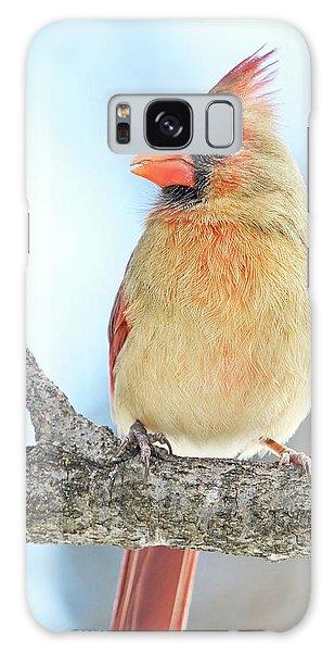 Female Cardinal On A Winter Morning Galaxy Case