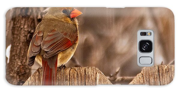 Female Cardinal On The Fence Galaxy Case