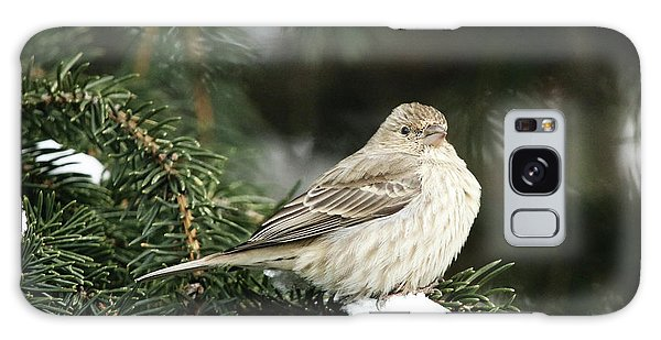 Female House Finch On Snow Galaxy Case