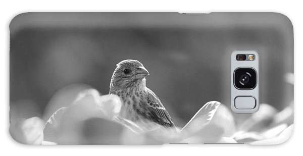 Female House Finch Perched In Black And White Galaxy Case