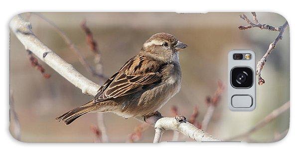 Female House Sparrow Galaxy Case