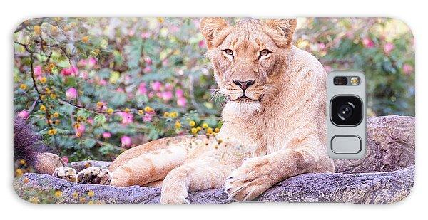 Female Lion Resting Galaxy Case